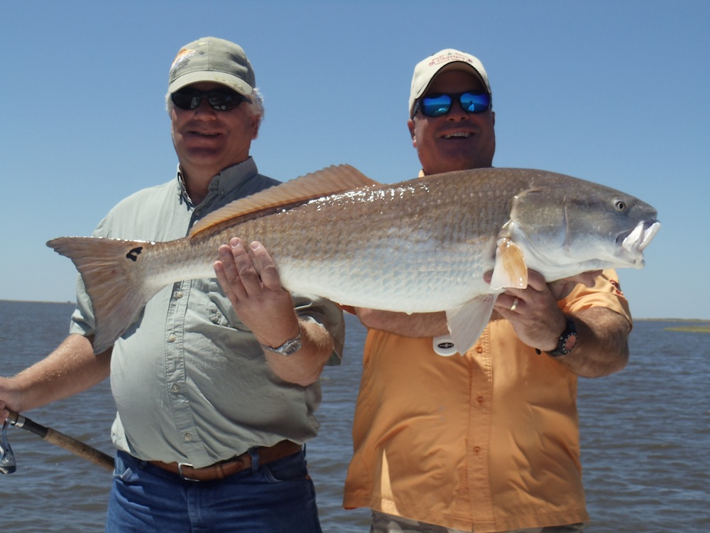 Red fish photos from pair a dice charter grand isle la for Grand isle fishing charters